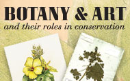 Botany and Art and Their Roles in Conservation